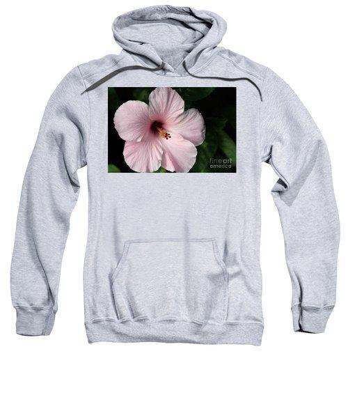 Beauty Of The Tropics Sweatshirt