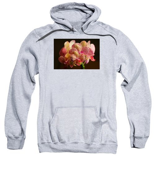 Beauty Up Close 4 Sweatshirt
