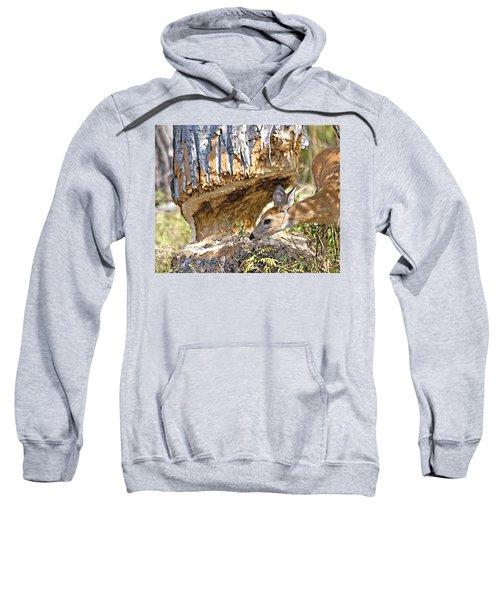Beaver Wannabe Sweatshirt