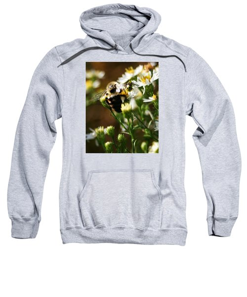 Bee And Spotted Cucumber Beetle On Aster Sweatshirt