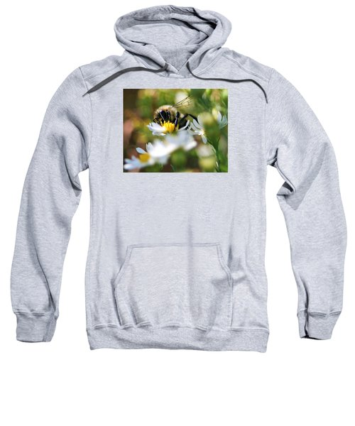 Bee On Aster Sweatshirt