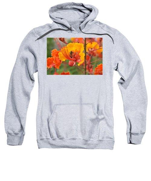 Bee Pollinating Bird Of Paradise Sweatshirt