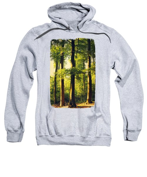 Beech Tree Forest In Evening Light Sweatshirt