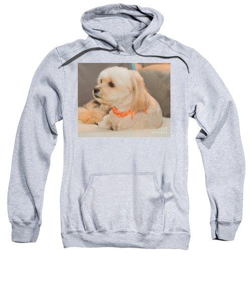 Benji On The Look Out Sweatshirt