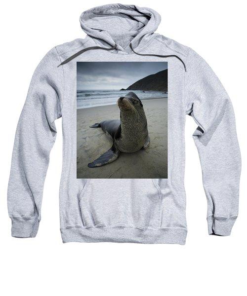 Big Seal Sweatshirt