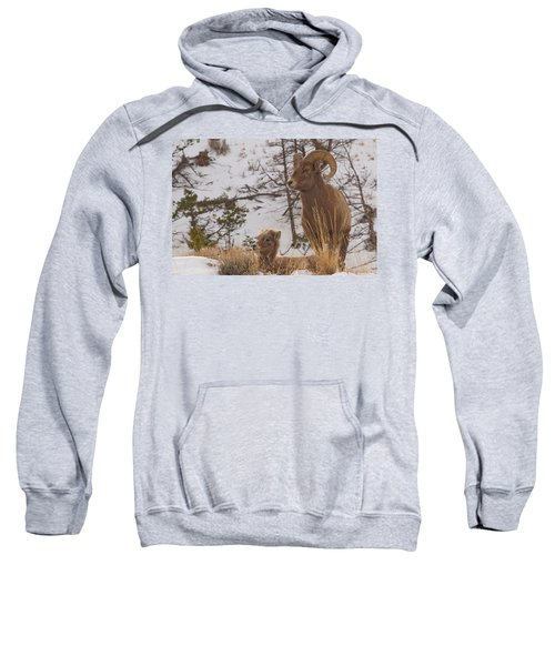 Bighorn Ram And Kid Sweatshirt