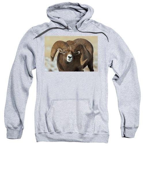 Bighorn Ram In Montana Sweatshirt