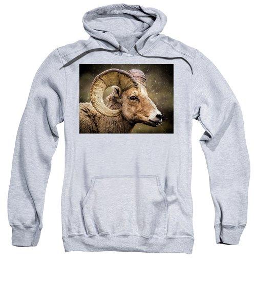 Bighorn Sheep In Winter Sweatshirt
