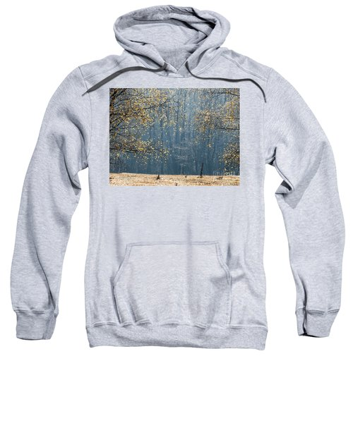 Birch Forest To The Morning Sun Sweatshirt