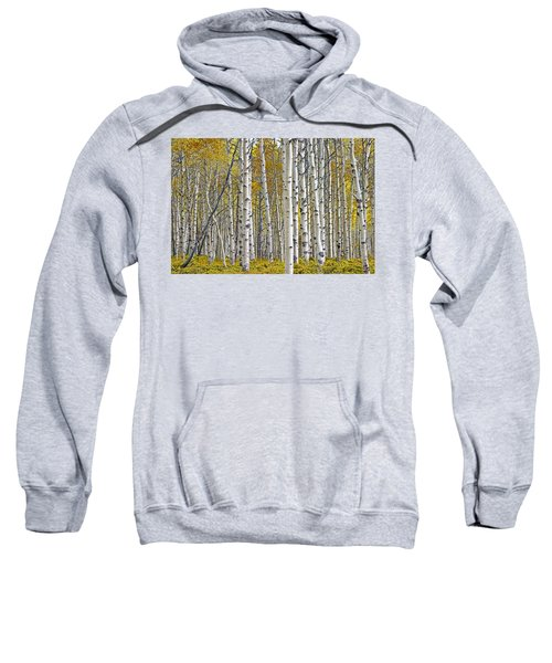 Birch Tree Grove With A Touch Of Yellow Color Sweatshirt