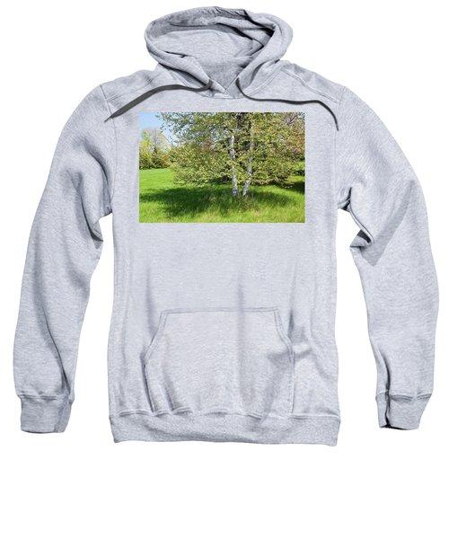 Birch Tree Sweatshirt