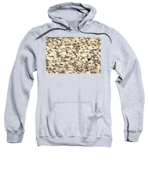 Bird Blizzard Sweatshirt