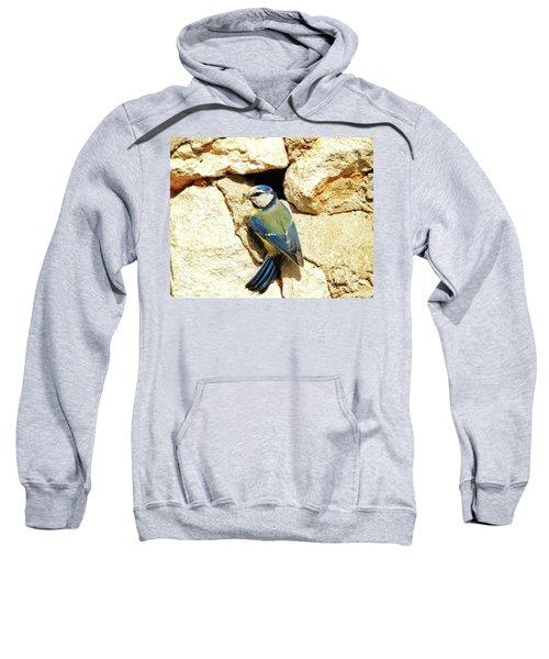Bird Feeding Chick Sweatshirt