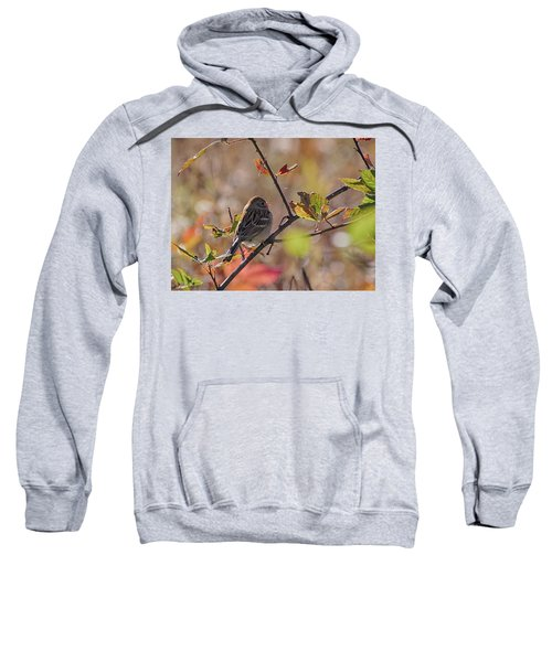 Bird In  Tree Sweatshirt