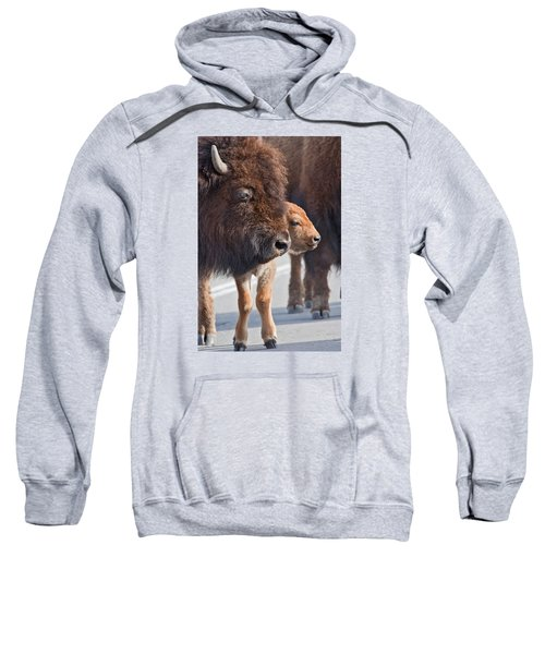 Bison And Calf Sweatshirt