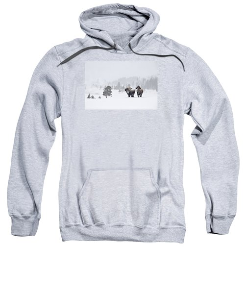 Bison In The Snow Sweatshirt