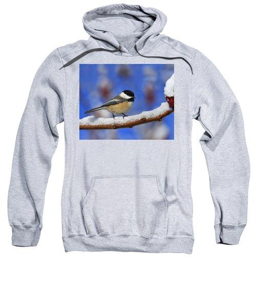 Black-capped Chickadee In Sumac Sweatshirt