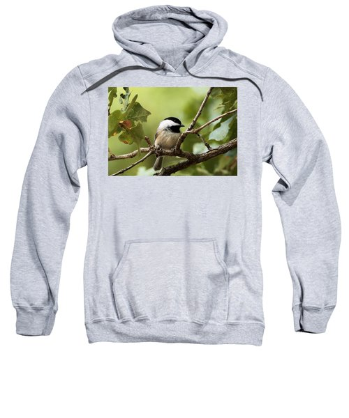 Black Capped Chickadee On Branch Sweatshirt