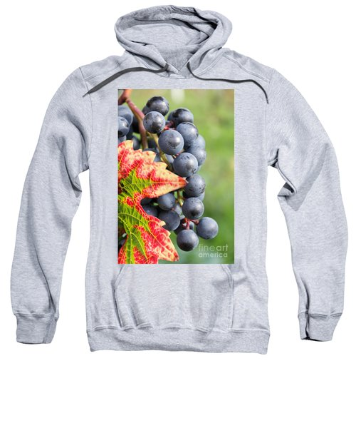 Black Grapes On The Vine Sweatshirt