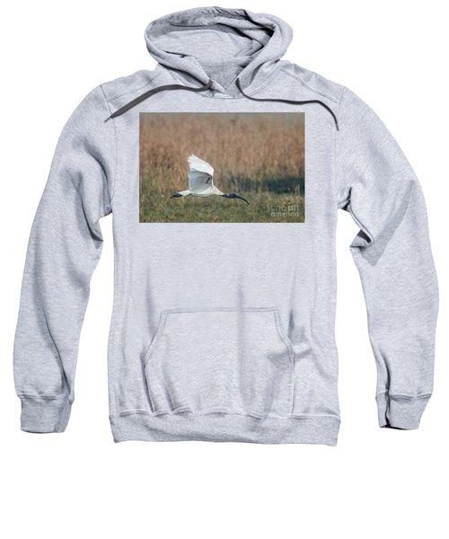 Black-headed Ibis 01 Sweatshirt