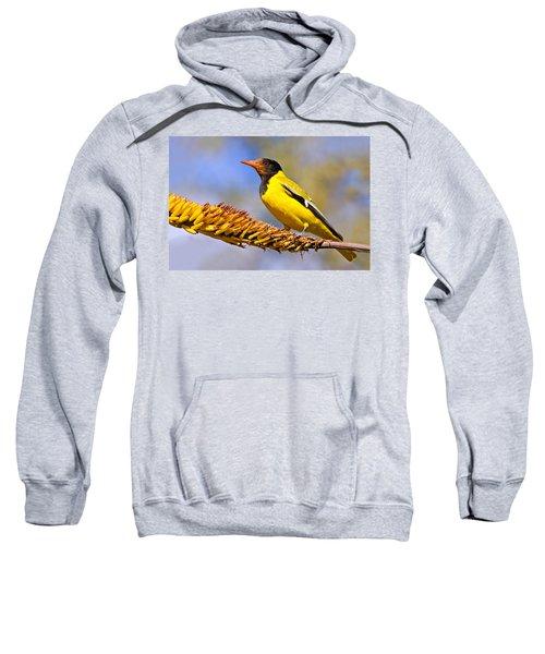 Black-headed Oriole Sweatshirt