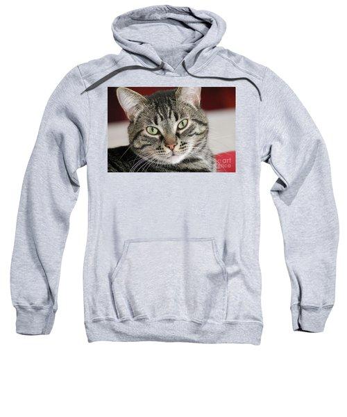 Black Tabby Sweatshirt