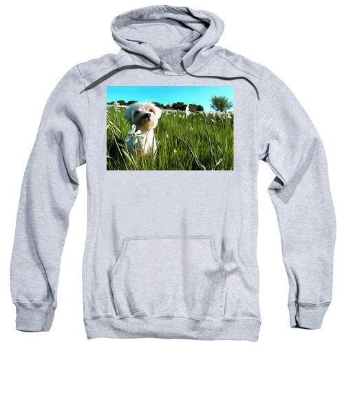 Blooming Daffodils In The Antola Park With Maltese I Paint Sweatshirt
