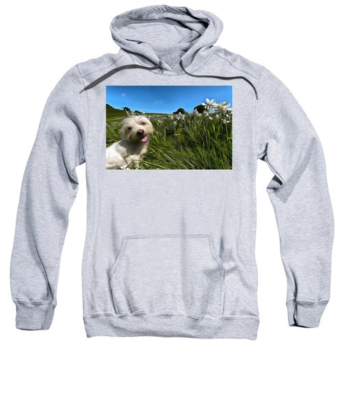 Blooming Daffodils In The Antola Park With Maltese II Paint Sweatshirt