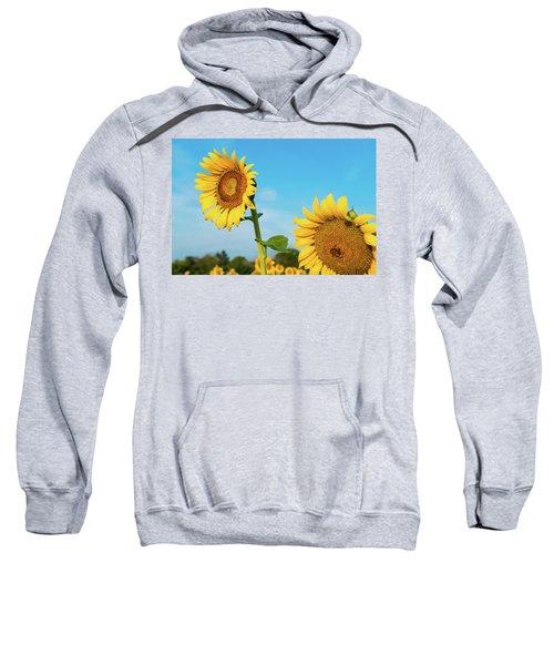 Blooming Sunflower In Blue Sky Sweatshirt