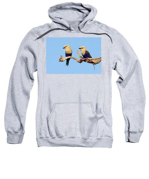 Blue-bellied Rollers On Branch  Sweatshirt