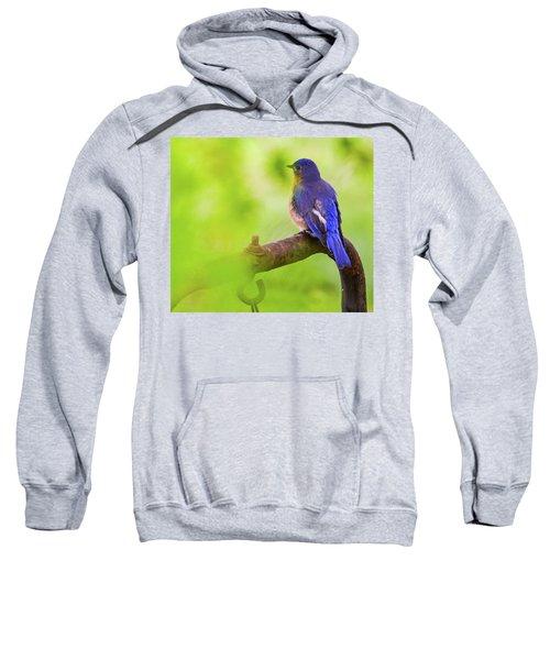 Blue Bird Sweatshirt