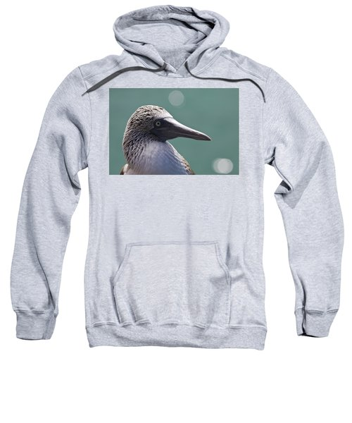 Blue Footed Booby II Sweatshirt by Dave Fleetham