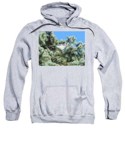 Blue Jay Colorado Spruce Sweatshirt