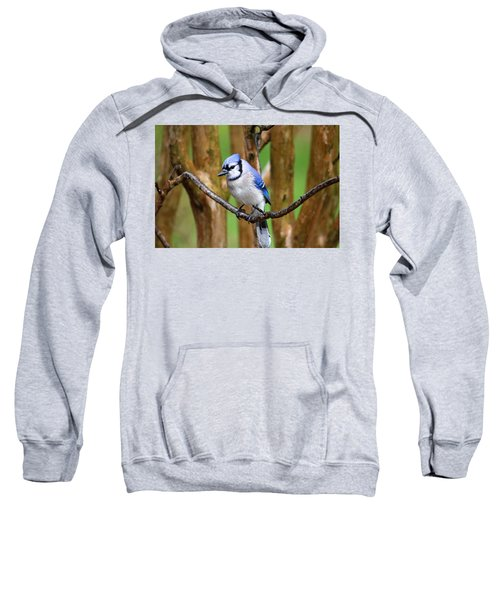 Blue Jay On A Branch Sweatshirt