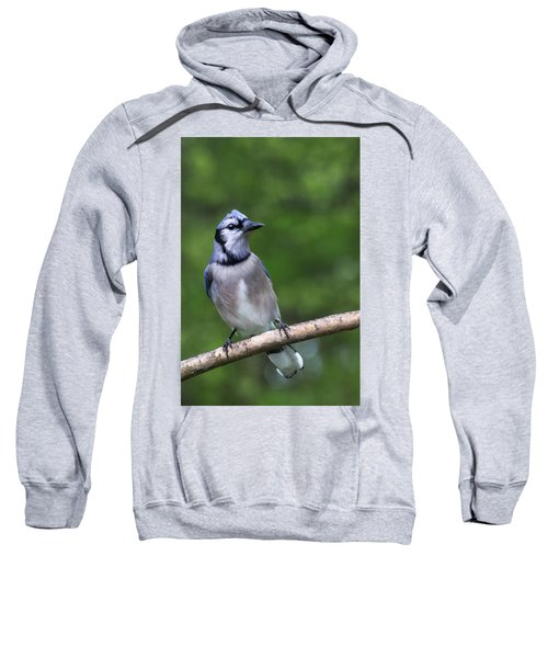 Blue Jay On Alert Sweatshirt