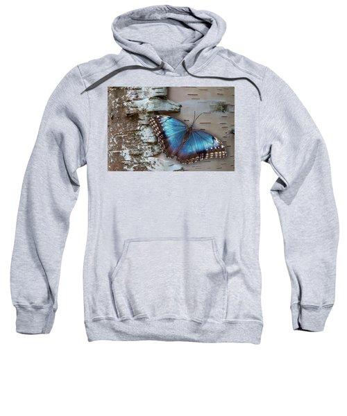 Blue Morpho Butterfly On White Birch Bark Sweatshirt