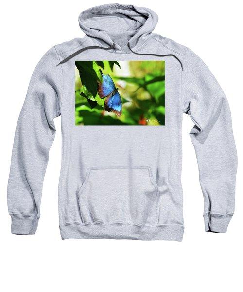 Blue Morpho Butterfly Sweatshirt
