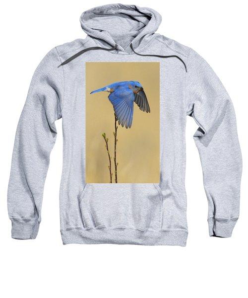 Bluebird Takes Flight Sweatshirt