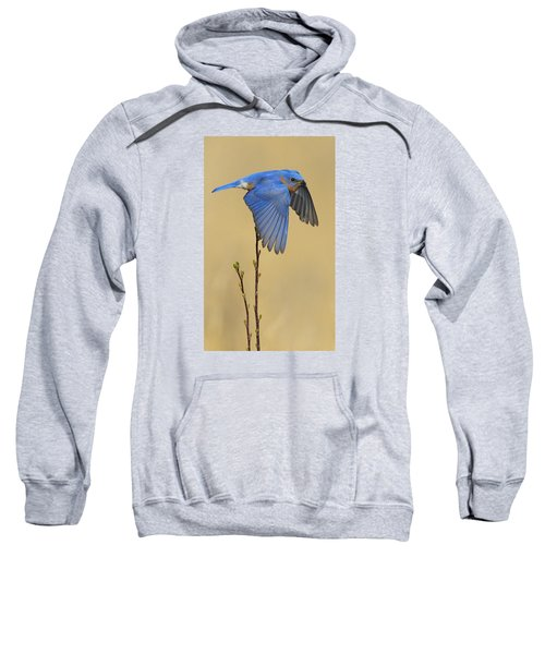 Bluebird Takes Flight Sweatshirt