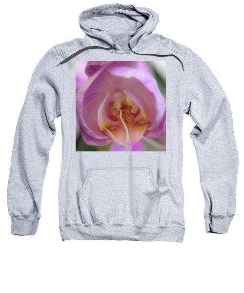 Boudoir Orchid Sweatshirt