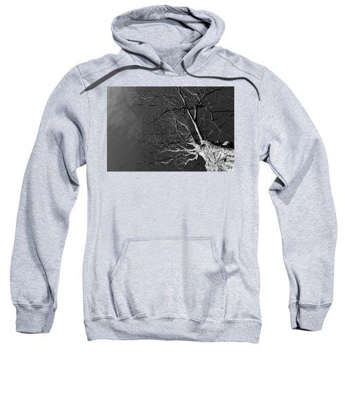 Branching Out Sweatshirt