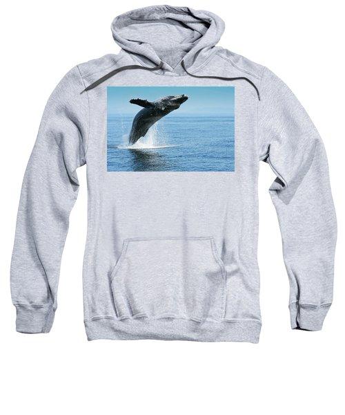 Breaching Humpback Whale Sweatshirt