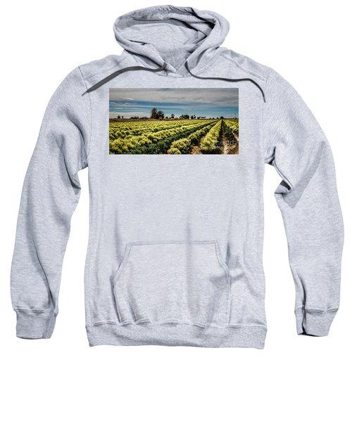 Broccoli Seed Sweatshirt by Robert Bales