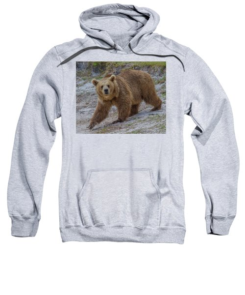 Brown Bear 3 Sweatshirt