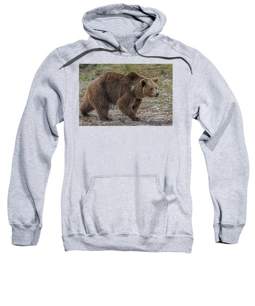 Brown Bear 6 Sweatshirt