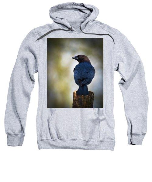 Brown-headed Cowbird Sweatshirt