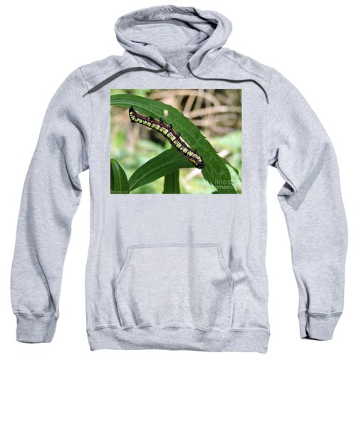 Brown Hooded Owlet Moth Larva  Sweatshirt