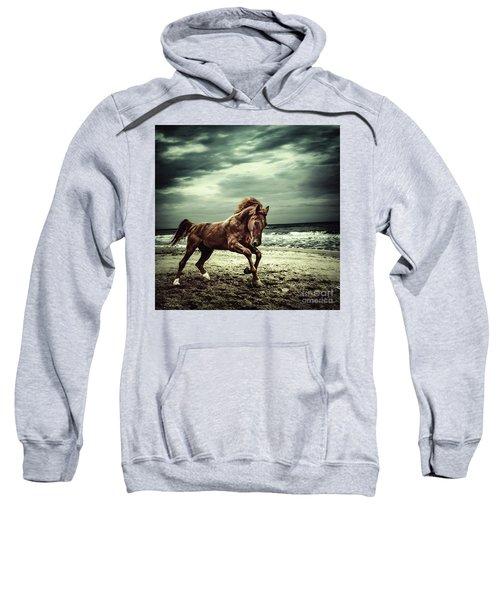 Brown Horse Galloping On The Coastline Sweatshirt