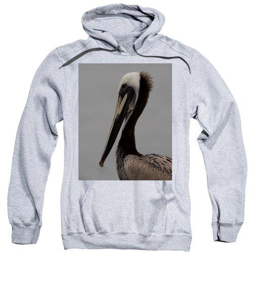Brown Pelican 10 Sweatshirt