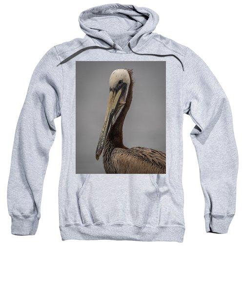Brown Pelican 11 Sweatshirt